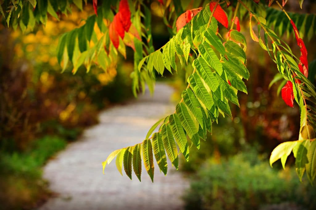 Colorful tree leaves overhanging pathway